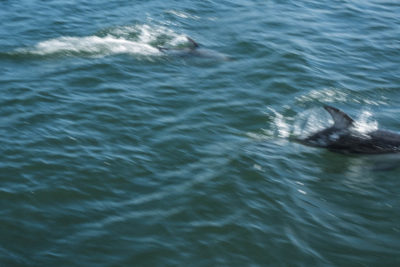 Dolphins in Sutlej Channel, Inside Passage