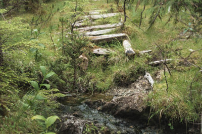 The old path from 1908 in Anna Inlet on the East Coast of Moresby Island, Haida Gwaii