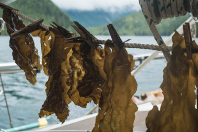 Drying Kelp, Haida Gwaii